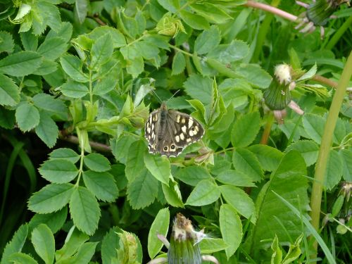 Basking Butterfly