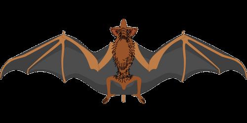 bat spread wings