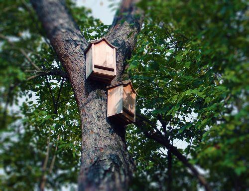 bat boxes bat house tree