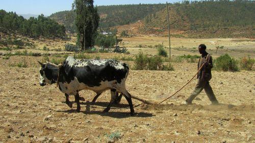 bauer ethiopia plough