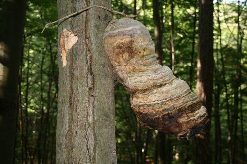 baumschwamm mushroom sponge