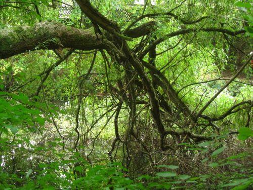 baustamm gnarled forest