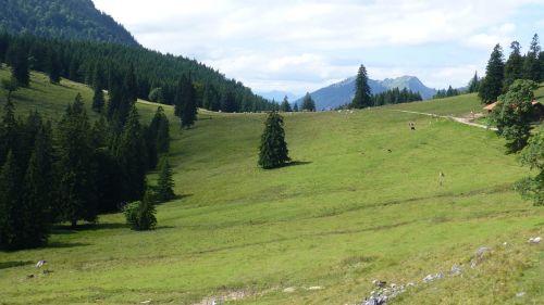 bavaria allgäu bear moss alpe