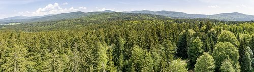 bavarian forest  view  forest