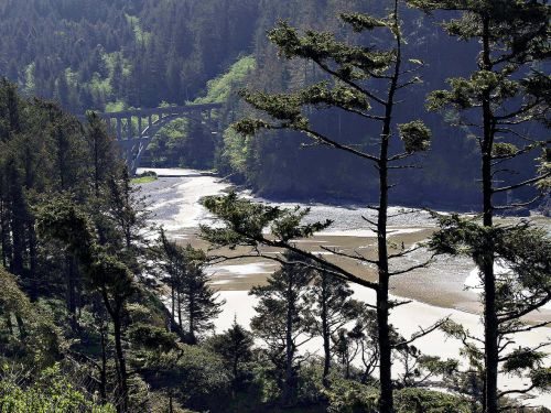 bay shoreline forest