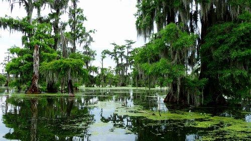 bayou  louisiana  marsh