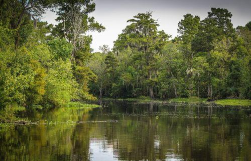 bayou swamp marsh