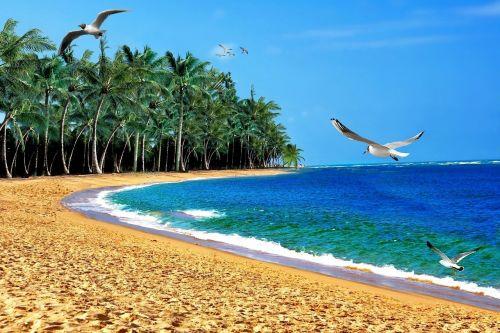 beach sand mar