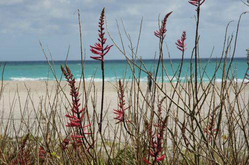 beach plant sand
