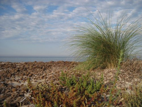 papludimys,žolė,vėjas,žolės,jūra,kranto,kraštovaizdis,gamta,vasara,bankas,kopos,kopos žolė,dangus,sausa žolė,vanduo,augalas,sicilija