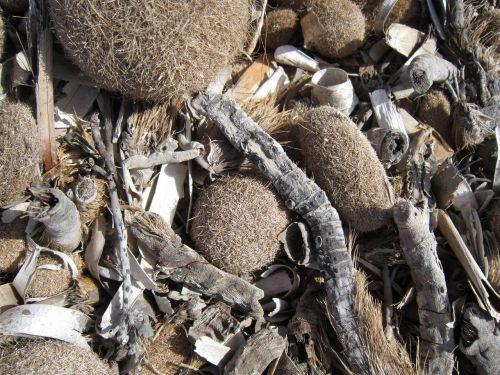 beach seaweed dry