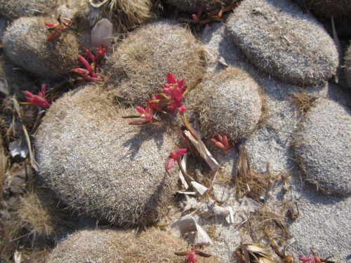beach seaweed sand