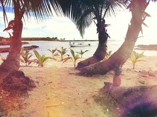 beach boat palms