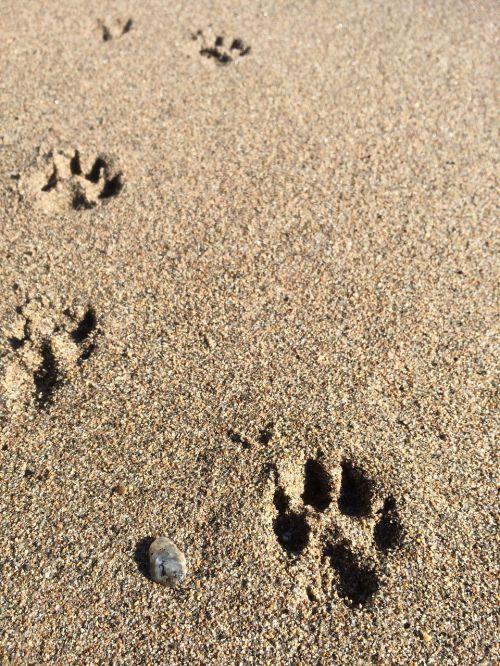 beach dog paws