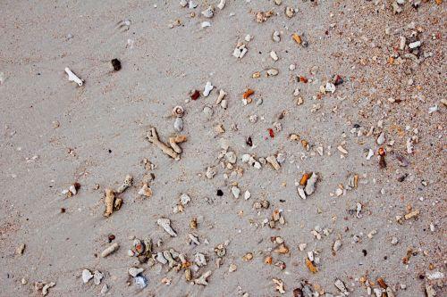 beach mussels sea