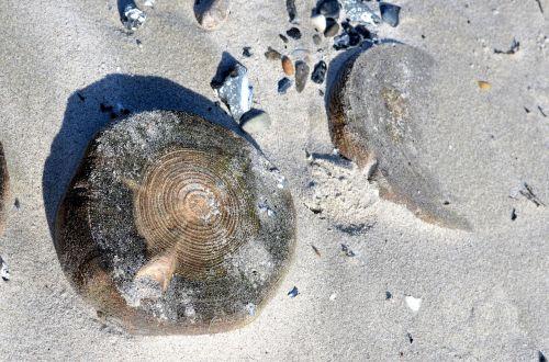 beach wood sand