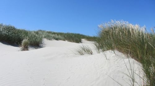 beach dune north sea