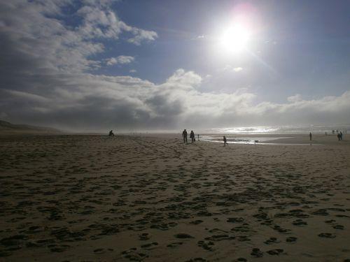 beach windy landscape