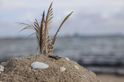 beach sandburg feather