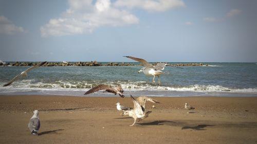 beach sea sea gull