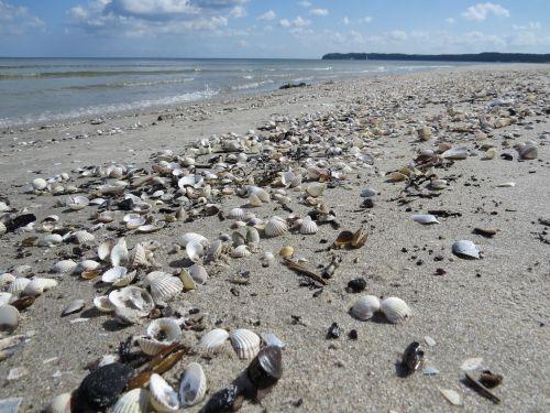 beach mussels sand