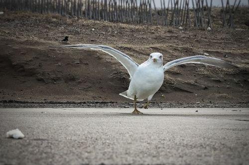 beach promenade seagull