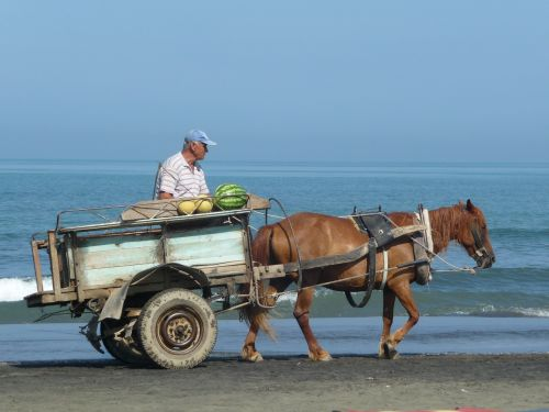 beach seller wagon