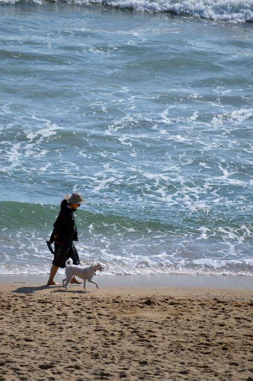 beach dog walking