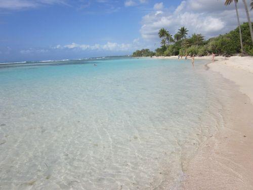 beach island palm trees