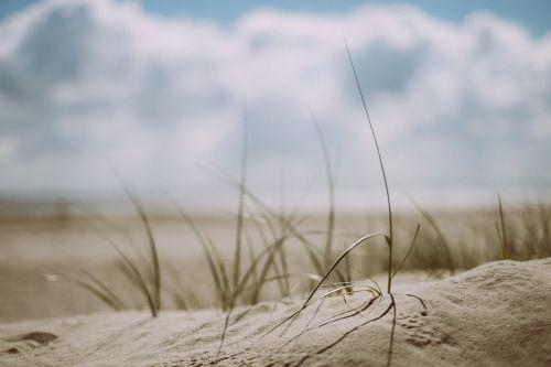 beach grass outdoors