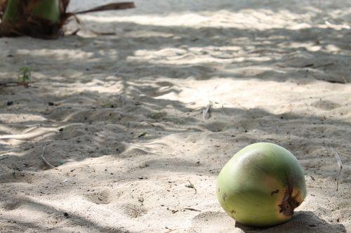 beach coconut sand