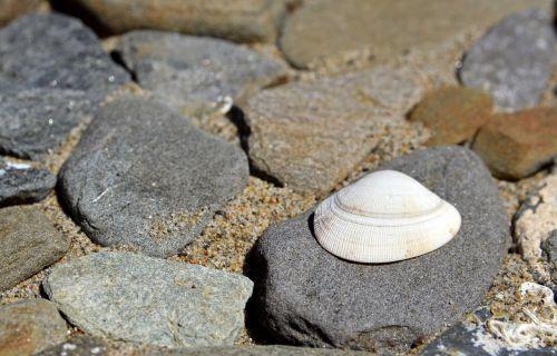 beach seashell summer
