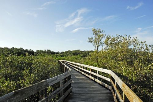 beach pathway nature