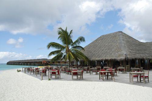 beach maldives bar