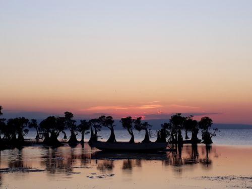 beach mangrove sunset
