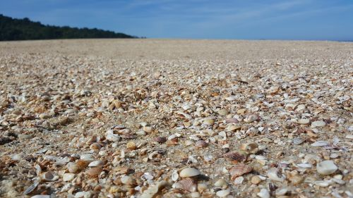 beach shells sky