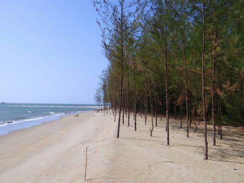 beach white sand casuarina forest