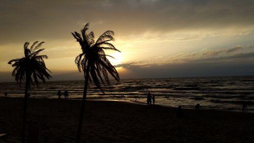 beach palm sea