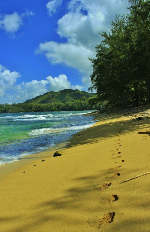 beach tracks sandy beach