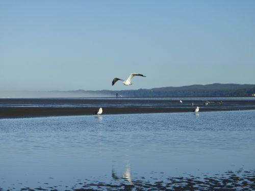 beach seagull flight