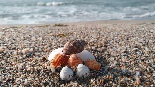 beach shells sea