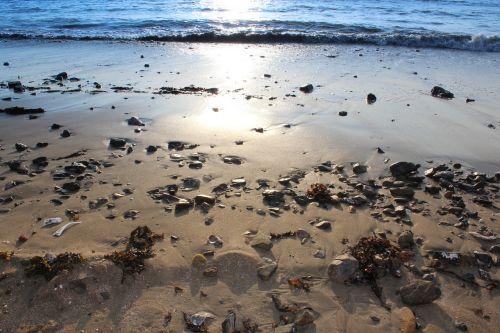 beach seashore sand