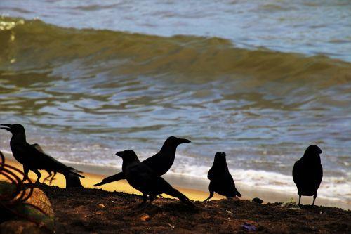 beach raven wave