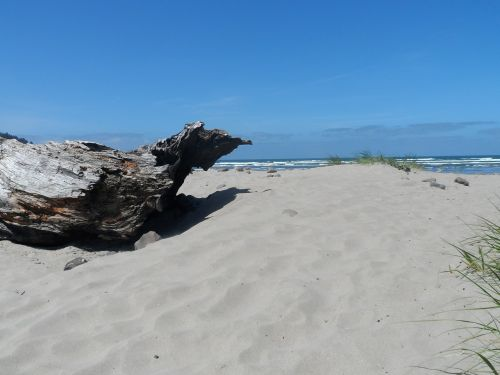 beach driftwood ocean view