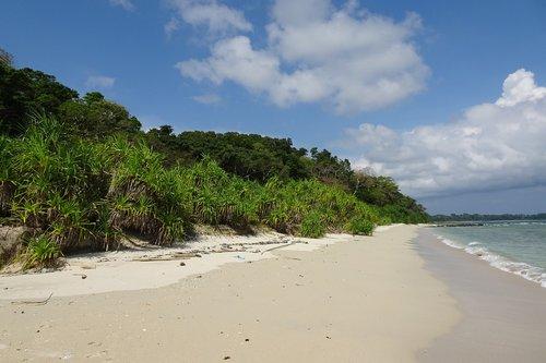 beach  bay  vegetation