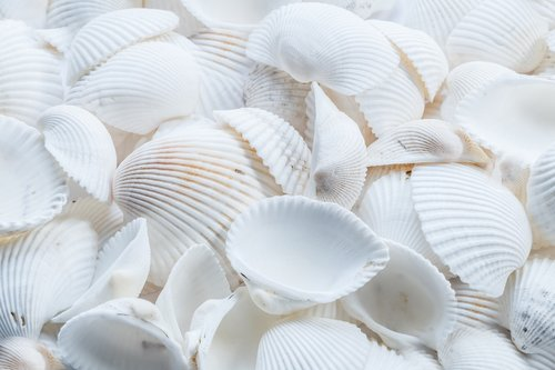 beach  shells  white