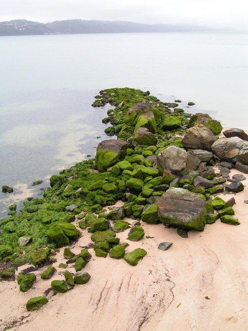 beach  rocks  mossy