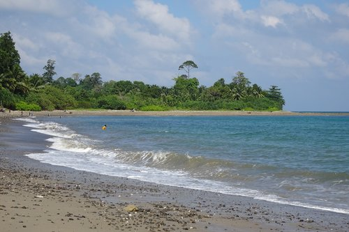 beach  rangat  flora