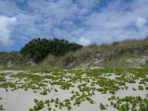 beach sylt north sea