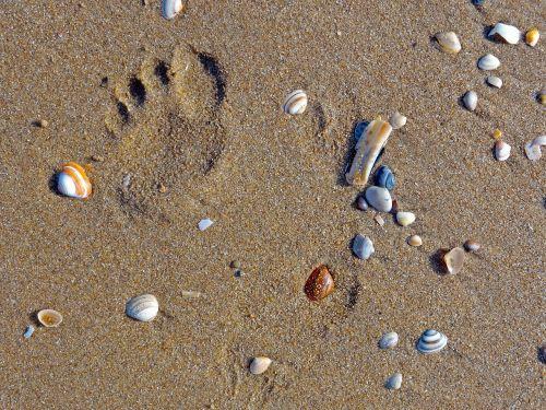 beach mussels footprint